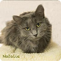 Adopt A Pet :: Natalie - Sherwood, OR