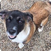 Adopt A Pet :: Eli - Patterson, CA