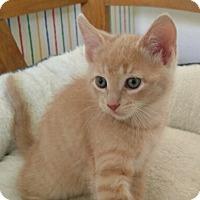 Adopt A Pet :: Creed - Addison, IL