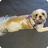 Adopt A Pet :: JEFFYpending - Eden Prairie, MN