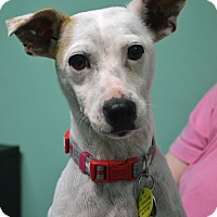 Adopt A Pet :: Taffy - Virginia Beach, VA