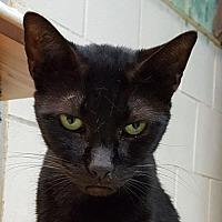 Adopt A Pet :: Allana - Lago Vista, TX