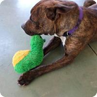 Adopt A Pet :: Lisa - Edgewood, NM