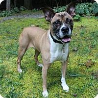 Adopt A Pet :: Bopsey - Brasstown, NC
