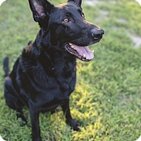 Adopt A Pet :: Onyx - Morrisville, NC