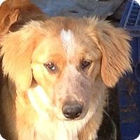 Adopt A Pet :: Peaches - Sunnyvale, CA
