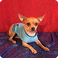 Chihuahua Mix Dog for adoption in DeForest, Wisconsin - Leroy