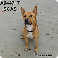 Adopt A Pet :: Gabriel - Lake Panasoffkee, FL