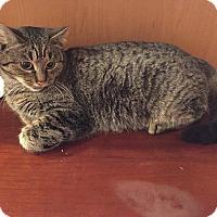 Adopt A Pet :: Reba - Boston, MA
