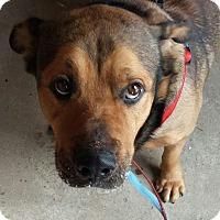 Adopt A Pet :: Chuckles - Cleveland, OH