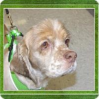 Adopt A Pet :: Blondie - Longview, WA