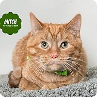 Adopt A Pet :: Mitch - Wyandotte, MI