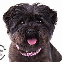 Adopt A Pet :: Lexie - Lodi, CA