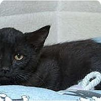 Adopt A Pet :: Reily - Sacramento, CA
