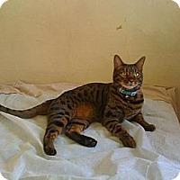 Adopt A Pet :: Oliver - Lantana, FL