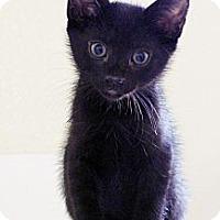Adopt A Pet :: Bo - Irvine, CA