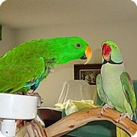 Adopt A Pet :: Murphy and Oscar - St. Louis, MO