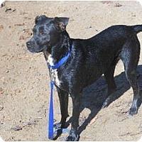 Adopt A Pet :: Spade - Seneca, SC