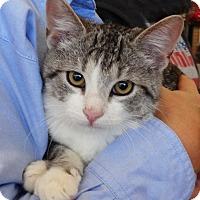 Adopt A Pet :: Hammer - N. Billerica, MA