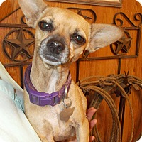 Adopt A Pet :: CHARLOTT - Weatherford, TX