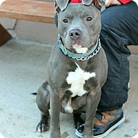 Adopt A Pet :: Tyrone - Tinton Falls, NJ
