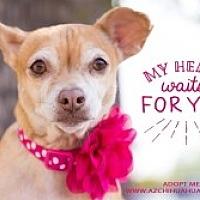 Adopt A Pet :: Lady - Mesa, AZ