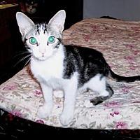 Adopt A Pet :: Kelly - Houston, TX