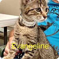 Adopt A Pet :: Evangeline - Warren, OH