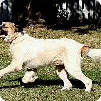 Adopt A Pet :: Maverick   Adopted - Tulsa, OK