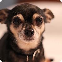 Adopt A Pet :: Bobo - Romeoville, IL