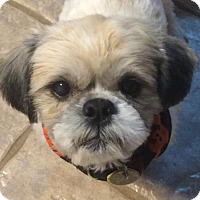 Adopt A Pet :: Jeff Dunham - Euless, TX