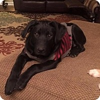 Adopt A Pet :: Cam - Nashville, TN