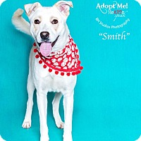 Adopt A Pet :: Smith - Houston, TX