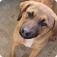 Adopt A Pet :: Kaley - Sudbury, MA