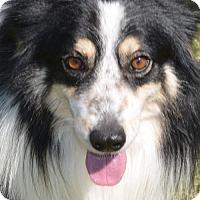 Adopt A Pet :: Lad - Brunswick, ME