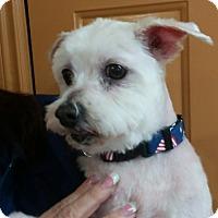 Adopt A Pet :: Bishop - Salem, OR