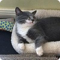 Adopt A Pet :: Bubblegum - Mission Viejo, CA