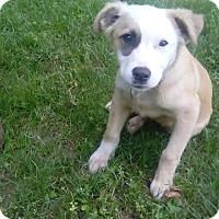 Adopt A Pet :: Maverick - Tampa, FL