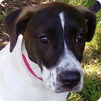 Adopt A Pet :: Billie Jean! - St Petersburg, FL
