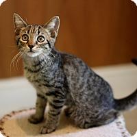 Adopt A Pet :: Lele - Dalton, GA