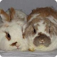 Adopt A Pet :: Bindi - Woburn, MA