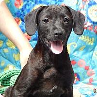 Adopt A Pet :: Aspen #2 (12 lb) Video! - SUSSEX, NJ