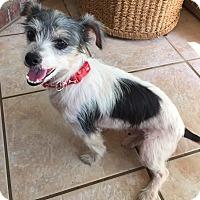 Adopt A Pet :: Hercules in Conway, AR - Austin, TX