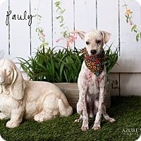 Adopt A Pet :: Pauly - Scottsdale, AZ