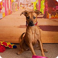 Adopt A Pet :: Pumpkin - Scottsdale, AZ