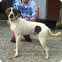 Australian Cattle Dog/Hound (Unknown Type) Mix Dog for adoption in Westwood, New Jersey - Baxter