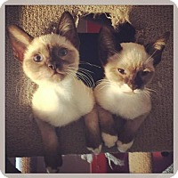 Adopt A Pet :: Peaches & Herb - Los Angeles, CA