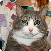 Adopt A Pet :: Cam - Wildomar, CA