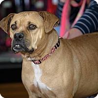 Adopt A Pet :: Hera Hope - Hanover, PA