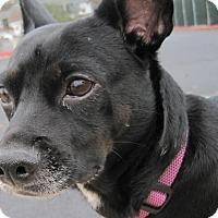 Adopt A Pet :: Roxy - Branson, MO